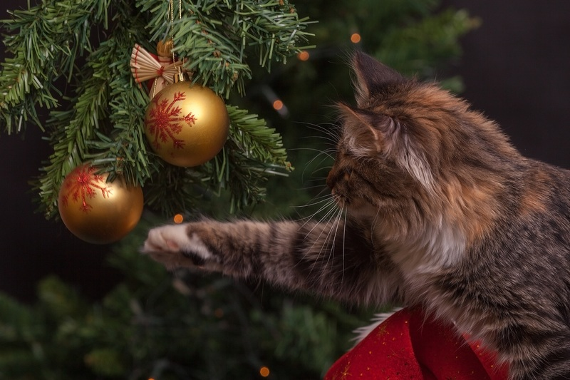 Cat near Christmas tree