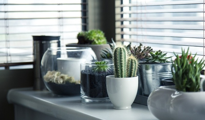 houseplants  - Simple Ways To Go Green At Home