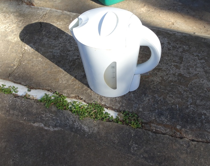 Kettle and weeds in crack of path