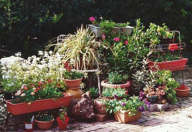 Plants in pots
