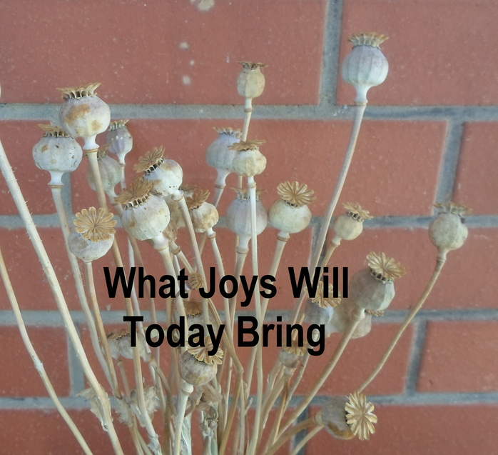 What joys will today bring